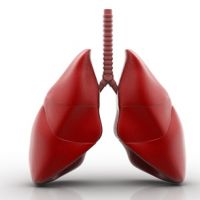 Pulmones y tráquea