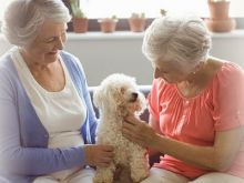 'Seniors Helping Seniors': mayores que cuidan a mayores